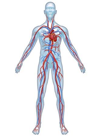 Angiologie: Gefäßuntersuchungen arteriell und venös